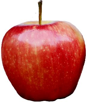 Finding The Next Apple (Stock)