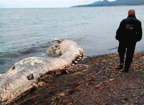 PARANORMAL EVIDENCE CAUGHT ON CAMERA: SEA MONSTERS CAUGHT